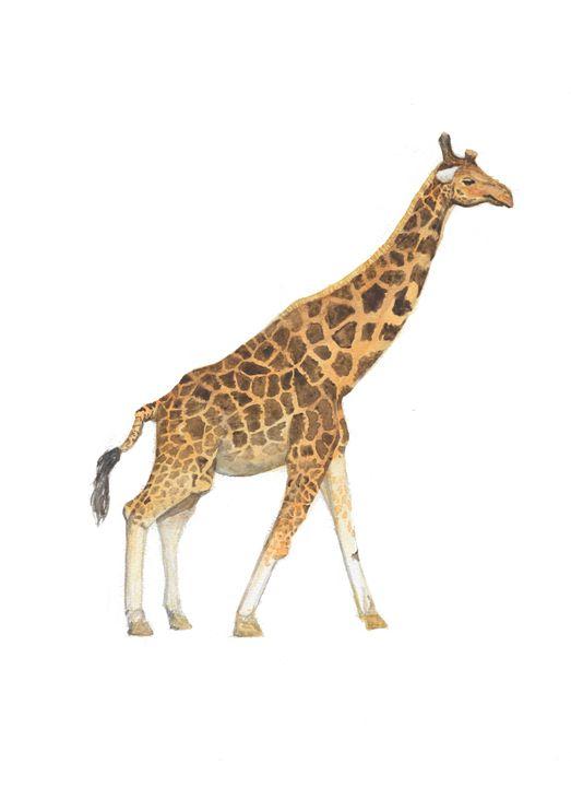 Giraffe - The Montessori Company