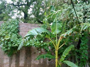Monsoon click
