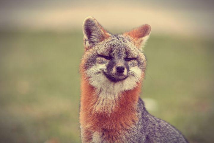 Alert-Grey Fox - phos illuminare