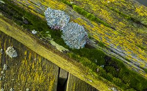 Colourful Lichen