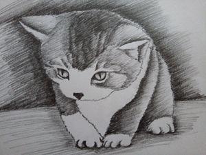 little sweet cat