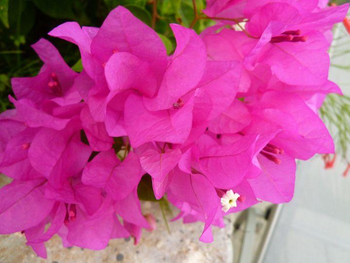 Flowers tropical - Little art