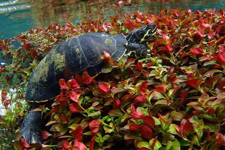 Turtle Bed - Joe Cruz Photography