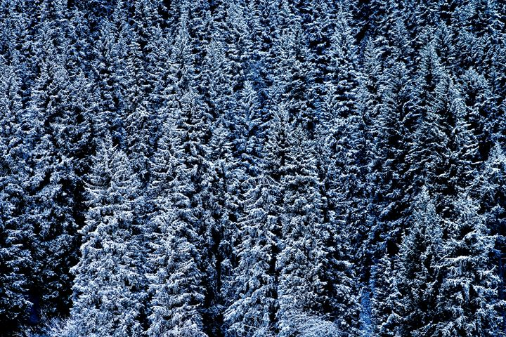 Winter Hybernation - The Art Gallery of Kamil Suleyev