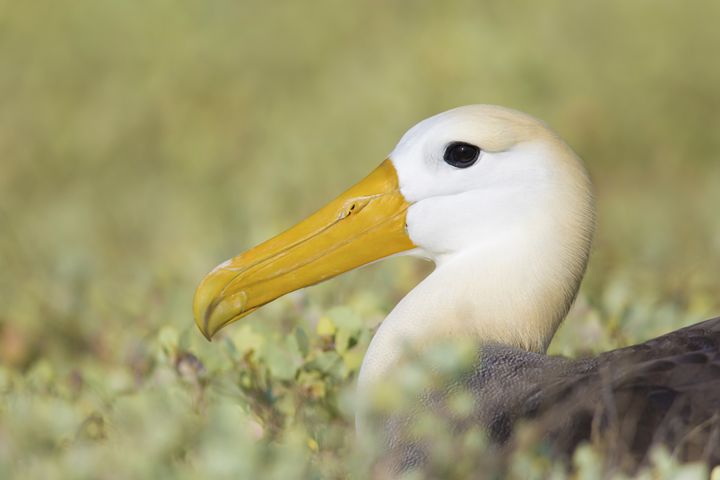 Out of the green sea - Bird & Wildlife Photography