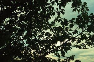 Skyline Silhouette