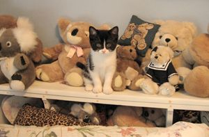 Posing with Stuffed Animals