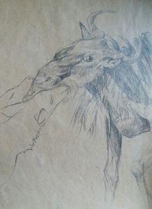 Dog and goat encounter