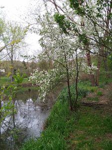 tree by pond