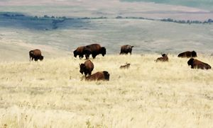 , National Bison Range
