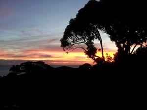 Sunrise through Mango