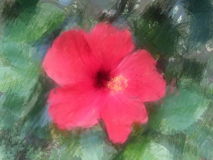 Hibiscus - Boogiba