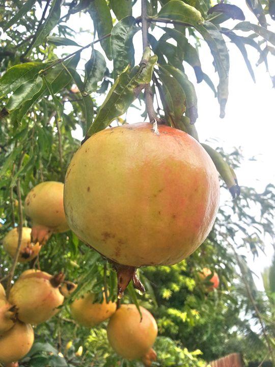 Pomagranate-2 - Boogiba