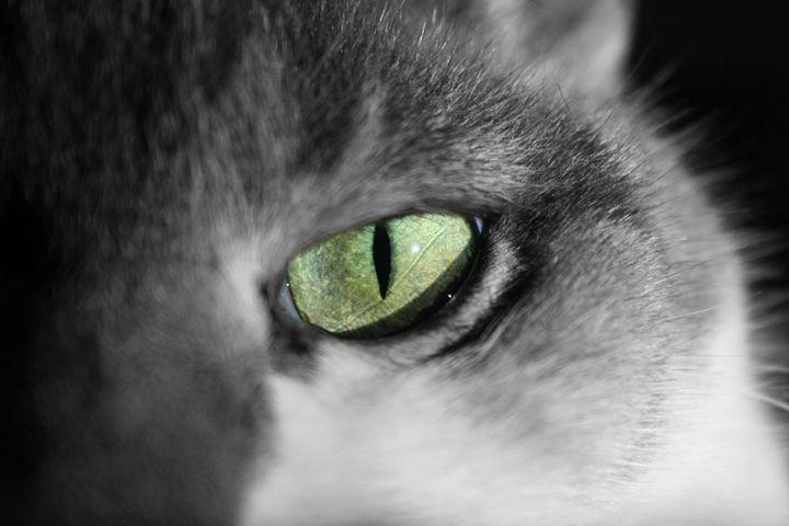 Cats eye - Austun's Photography