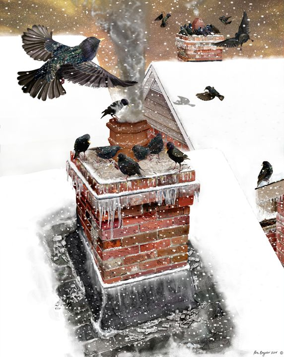 Starlings in the winter - RCRayner