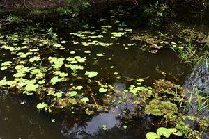 Lily pads in Neak Pean lake - RCRayner
