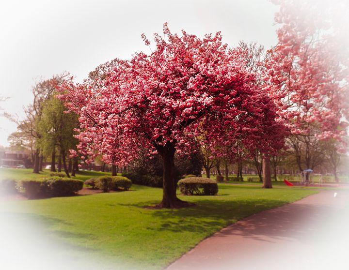 Pink Tree - David Jones