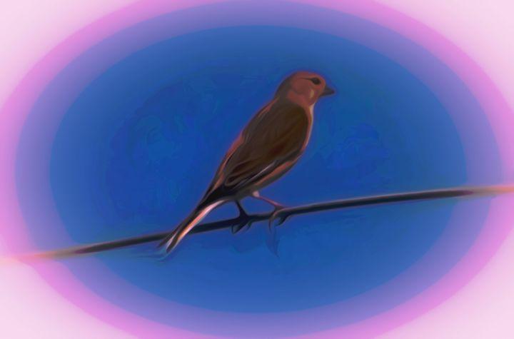 Waiting Bird - David Jones
