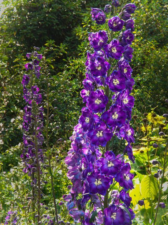 Purple flower - David Jones