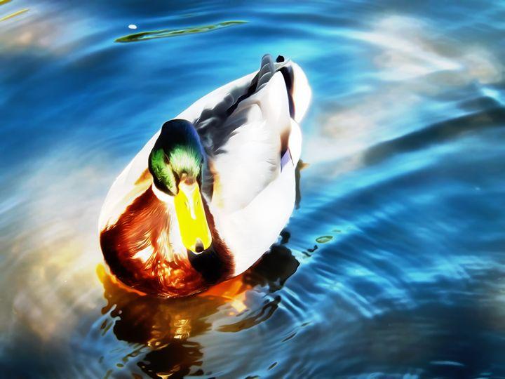 Duck Oil - David Jones