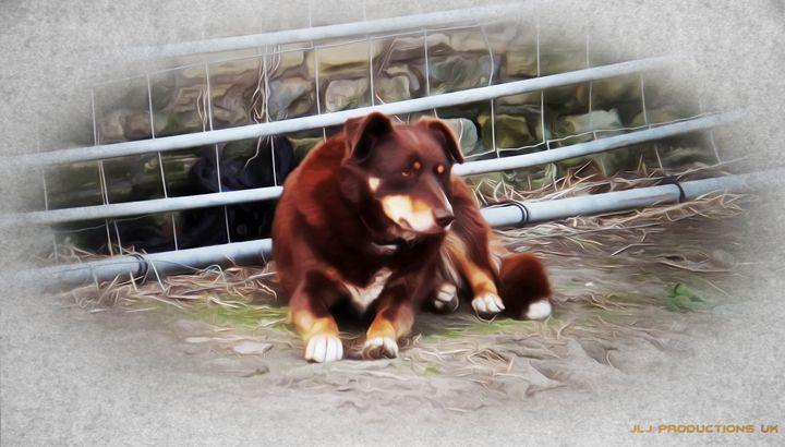 Farm Dog - David Jones