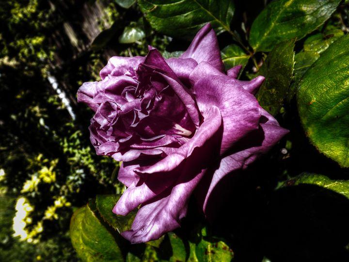 Purple to Black - David Jones