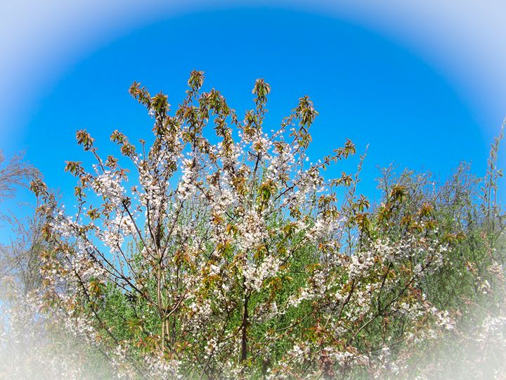 Tree Flower - David Jones