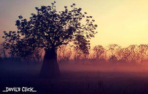 Dawn of hope