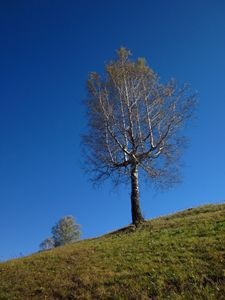 Lonely tree against clear sky