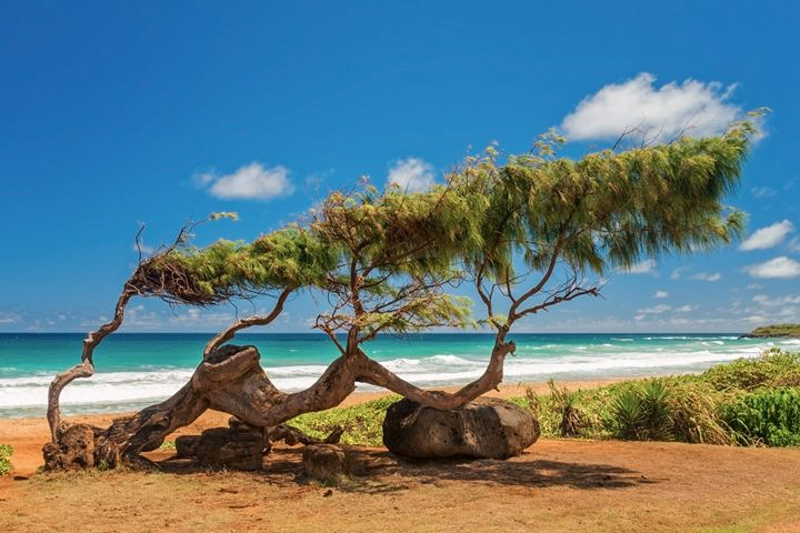 Wind Blown Tree - Brian Harig Photography