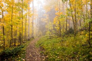 Foggy Winsor Trail Aspens in Autumn