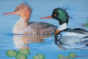 Mergasters on a Water Lily Pond - E.W.Walsh Paintings