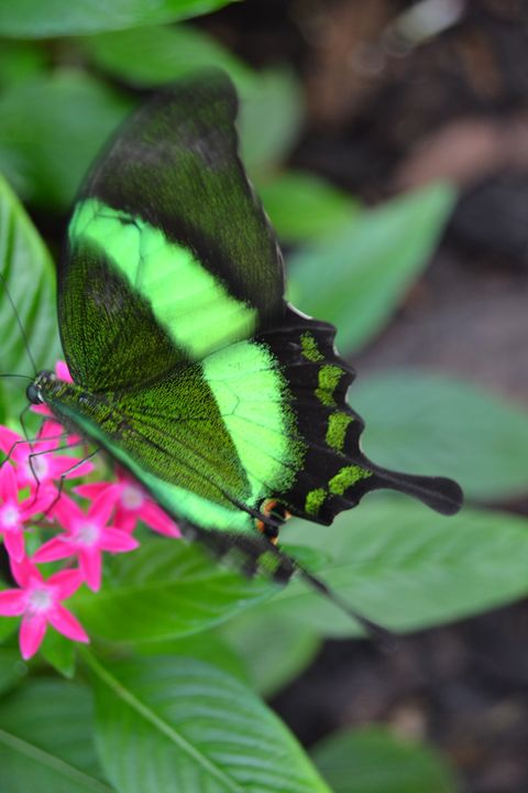 Swallowtail Butterfly - Fine Art Photography, Nature and More!