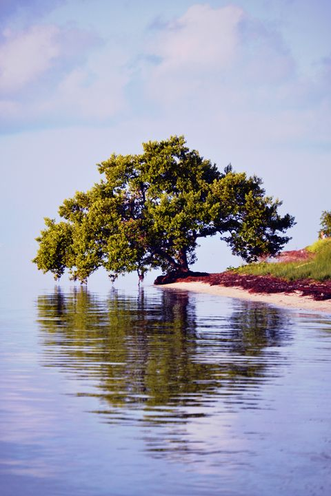 Mangrove Mist - Fine Art Photography, Nature and More!