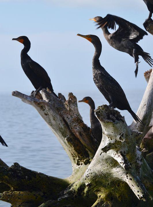 Cormorant Corner - Fine Art Photography, Nature and More!