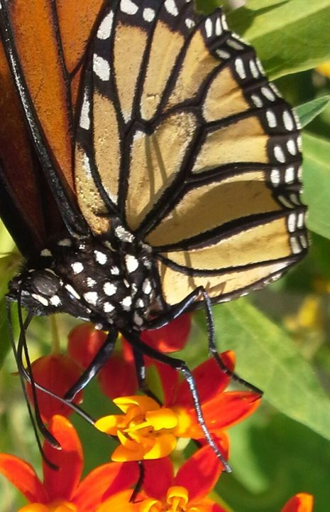 Macro Monarch - Fine Art Photography, Nature and More!
