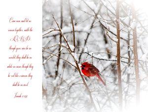 Cardinal with Scripture