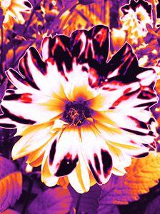 Mommas Psychadelic Flower