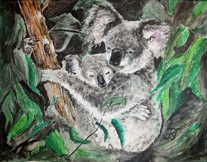 Koala Mama Love