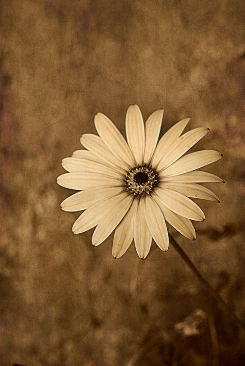 Vintage Daisy - Christine56