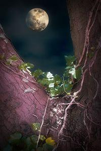 Gently Through The Night - Christine56