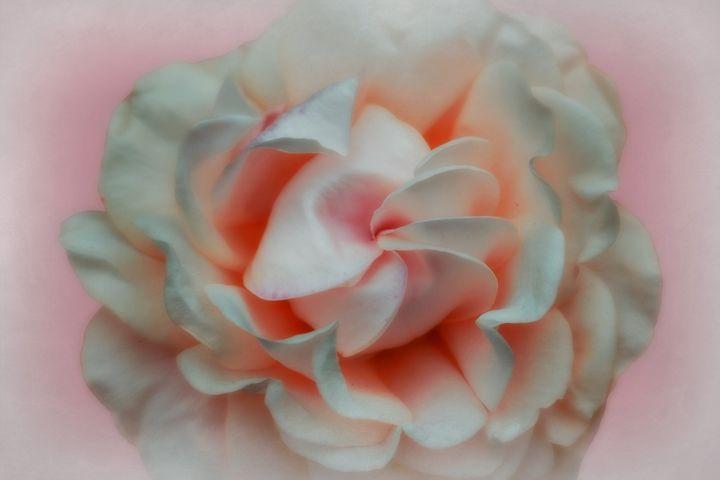 Silk Blush - Christine56