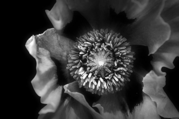 Poppy - Christine56