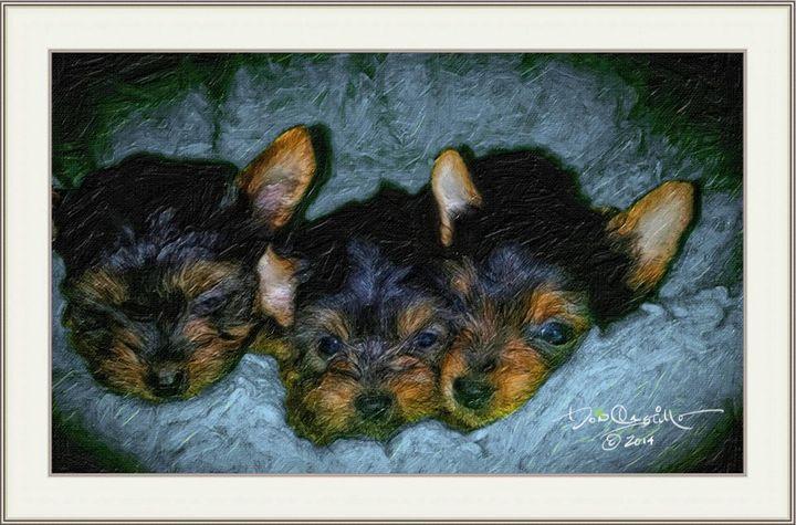 3 adorable pups - Don Castillo
