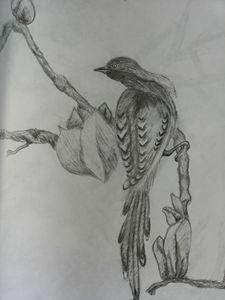 Bird - Justine