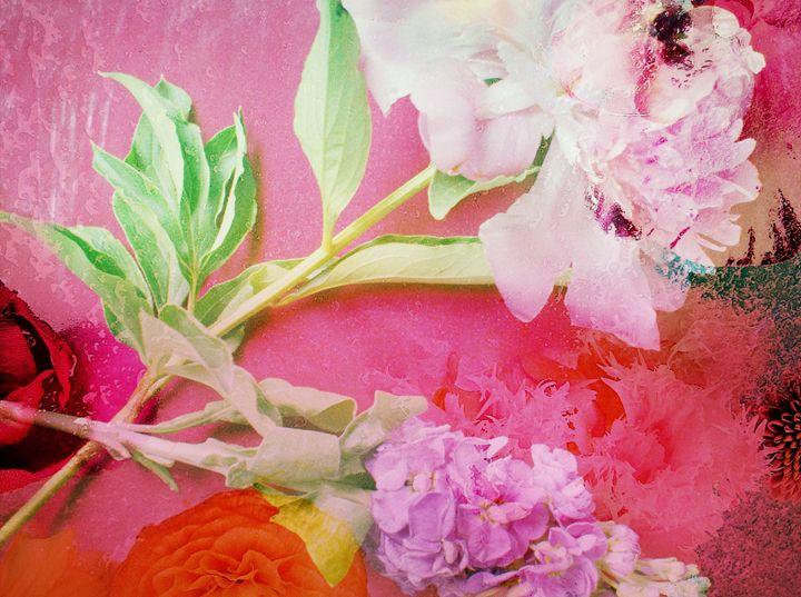 Rasberry Fields - Flowers by Alaya Gadeh