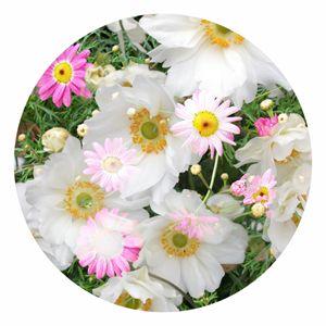 Flower Circle