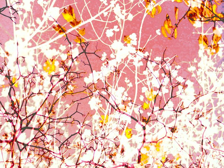 White Tree Motion - Flowers by Alaya Gadeh