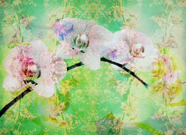 Orchids On Green Floral Background - Flowers by Alaya Gadeh