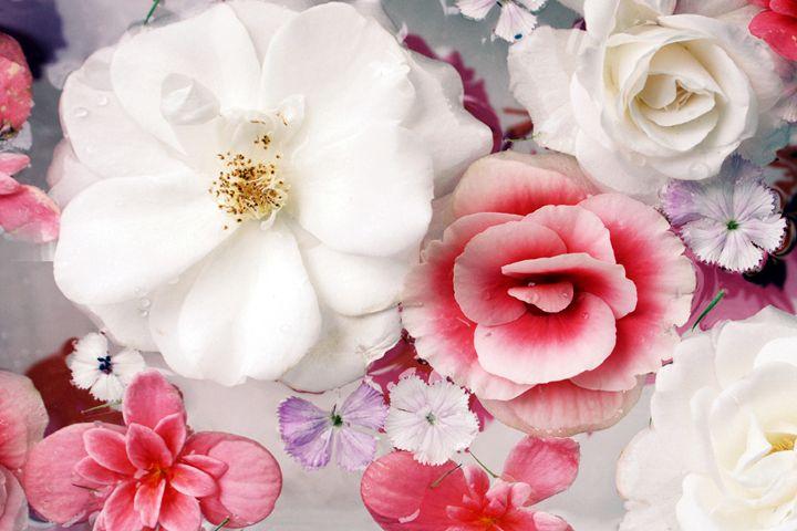 Beautiful Begonia Roses - Flowers by Alaya Gadeh